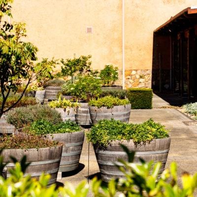 Green Plants Inside The Function Venue Garden