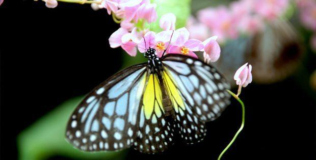 kuala-lumpur-butterfly-park_05