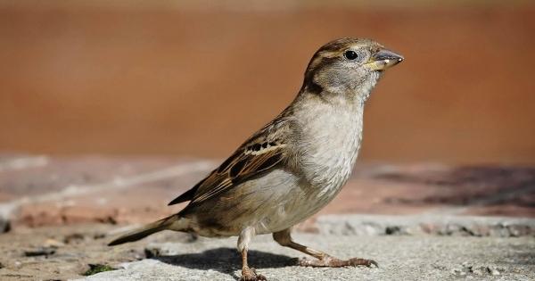 sparrows_hd_24