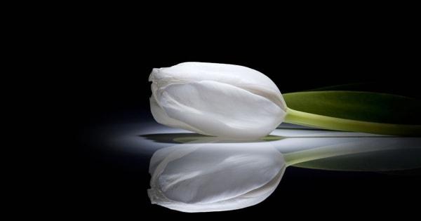 tulips-14