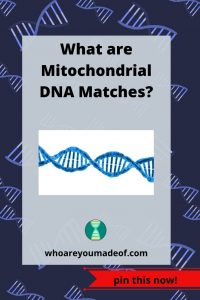 What are Mitochondrial DNA Matches?