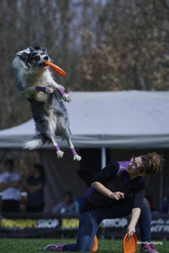 Frisbee Dog 23