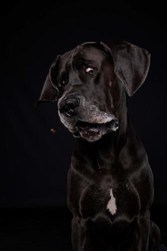 Hundefoto Koeln33