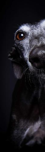 Hundefoto Koeln47