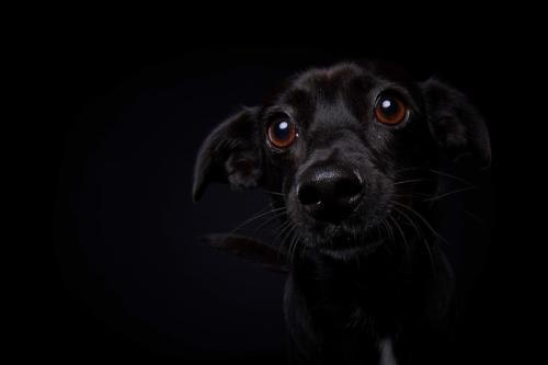 Hundefoto Koeln49