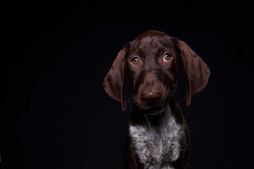 Hundefoto Koeln73