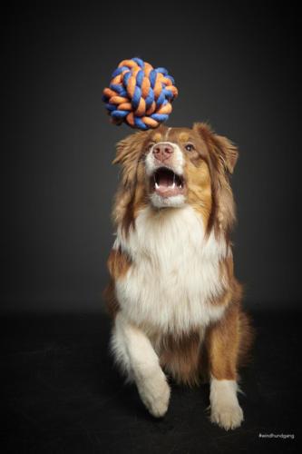 hundefotograf