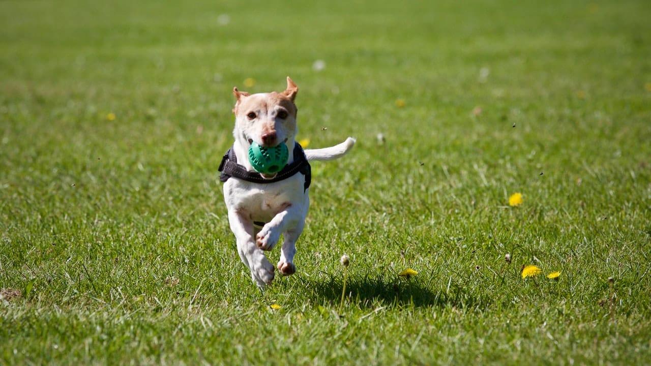 Tips & Tricks  om buiten met je pup te spelen