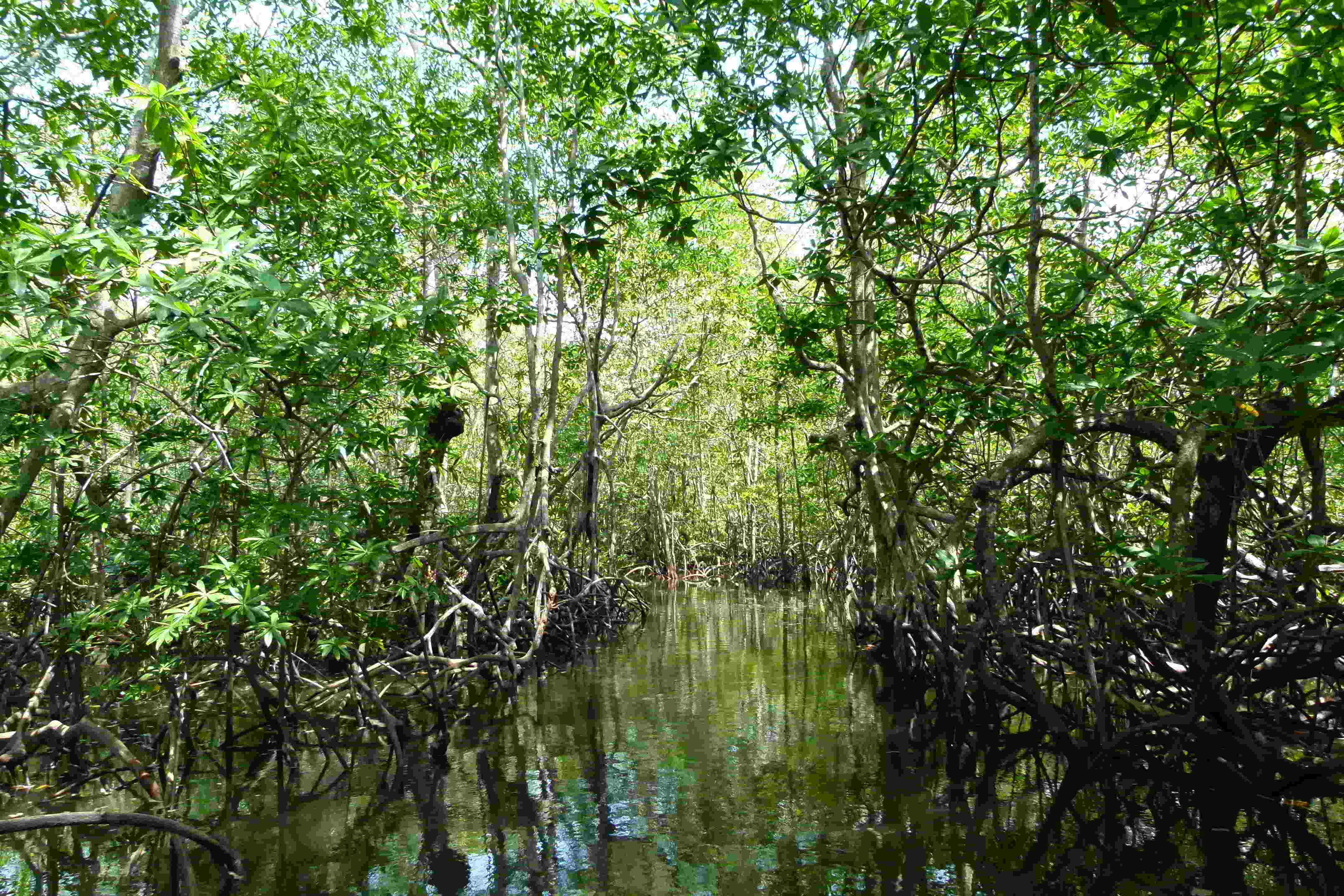 kokomana-kokopelli-logo-restaurant-sierpe-ballena-tales-osa-enjoy-tours-puravida-nature-iguana-nature-monkey-mangrove