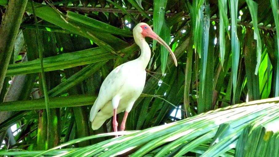 kokopelli-sierpe-kokopelli-sierpe-restaurant-tours-mangrove-corcovado-nature-sierpe-tour-14