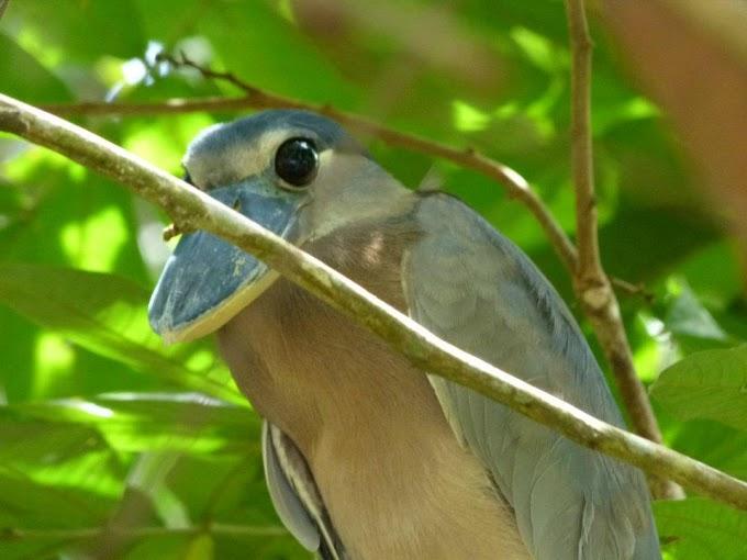 kokopelli-sierpe-kokopelli-sierpe-restaurant-tours-mangrove-corcovado-nature-sierpe-tour-21