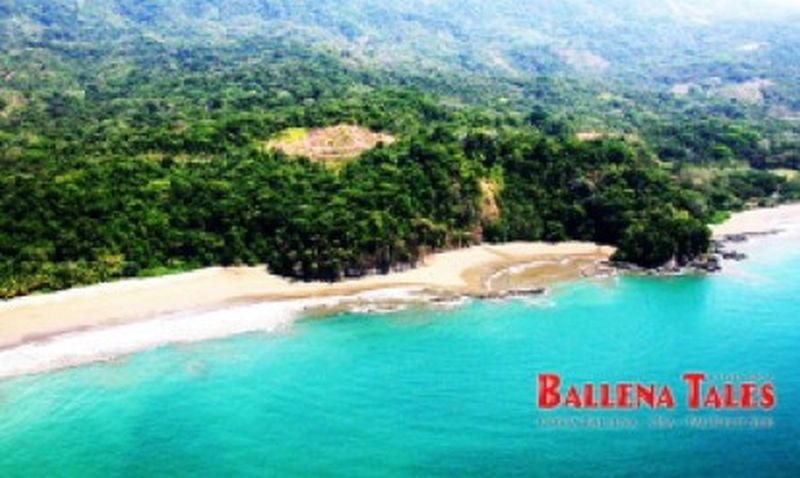 Playa Arco, Parque Marino Ballena