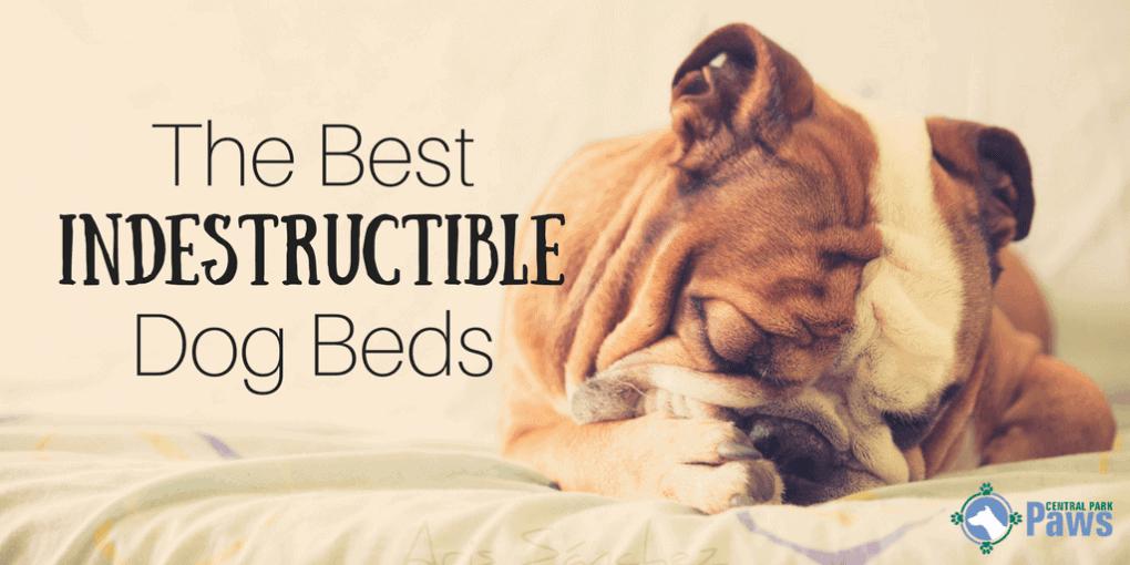 Best Indestructible Dog Beds