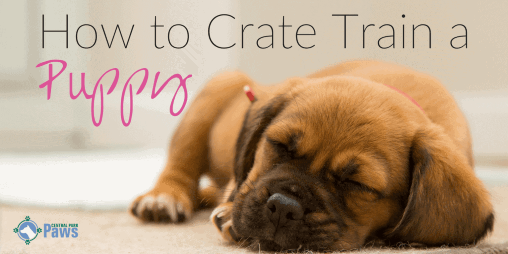 How to Crate Train a Puppy