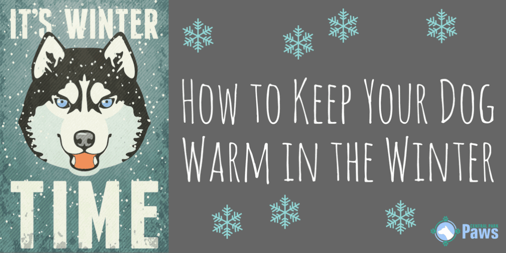 How to Keep Your Dog Warm in the Winter