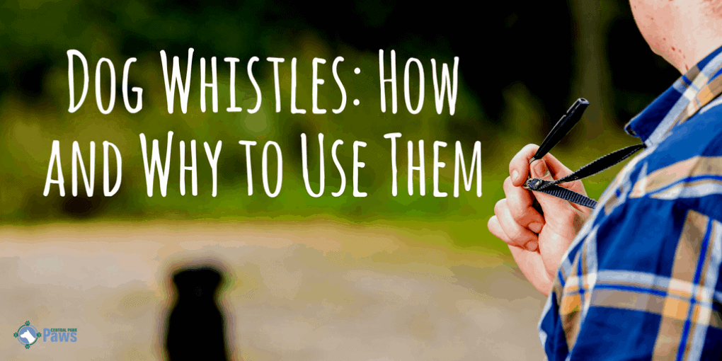 Dog Whistles: How and Why to Use Them (Not Just to Stop