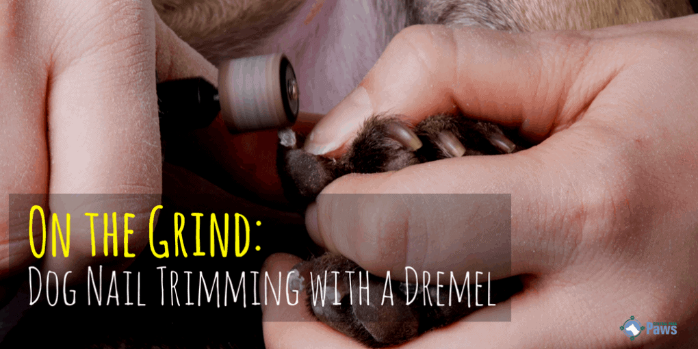 On the Grind: Dog Nail Trimming with a Dremel Tool - A How