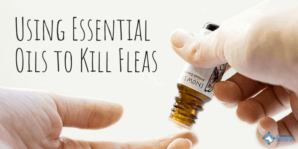 Using Essential Oils to Kill Fleas