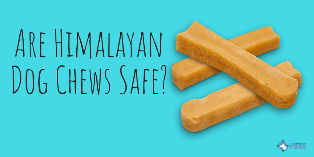 Are Himalayan Dog Chews Yak Cheese Bones Safe For Dogs