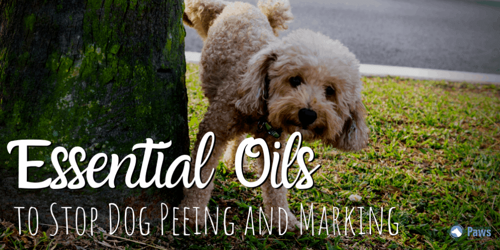Essential Oils to Stop Dog Peeing and Marking
