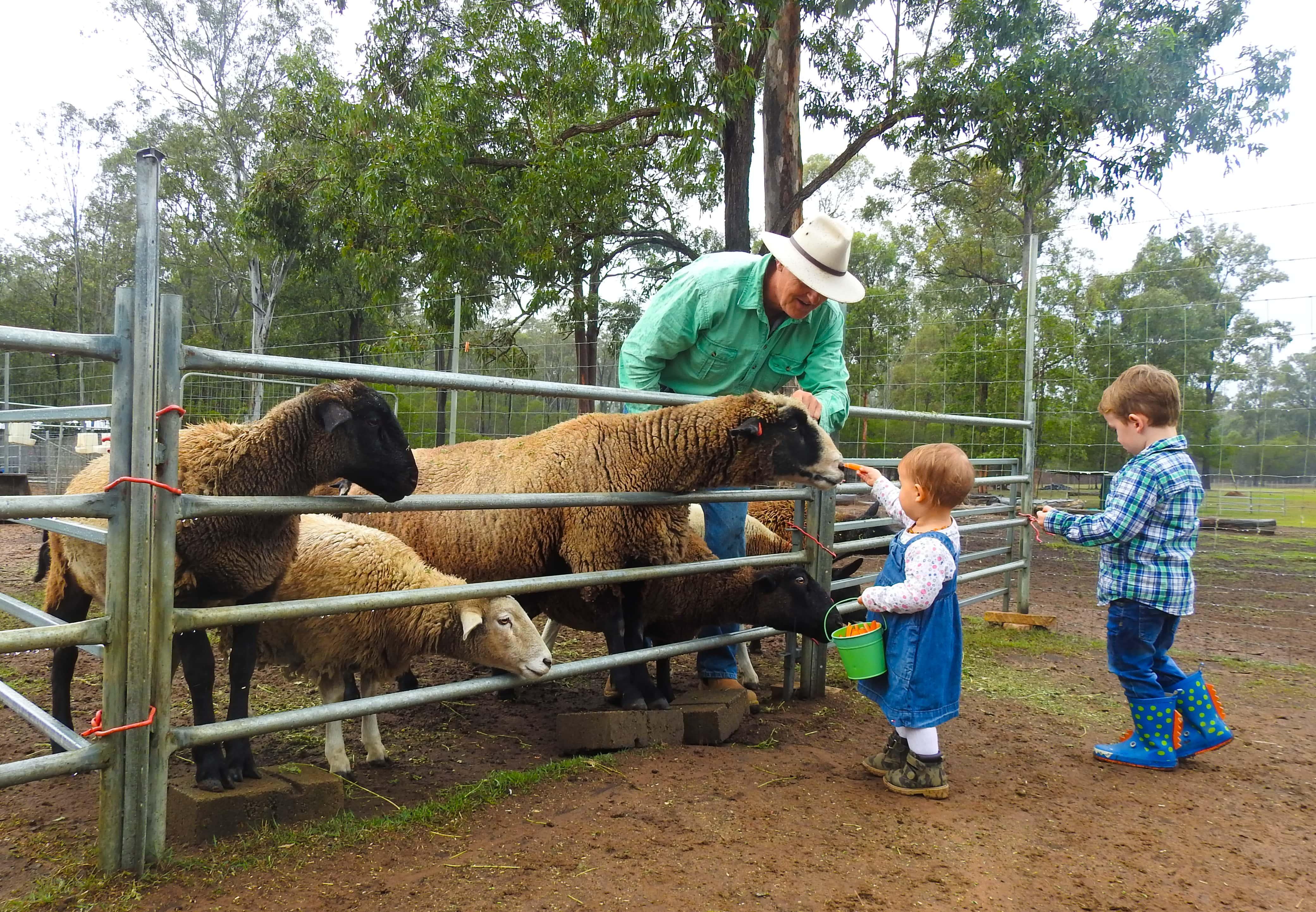 Haigslea Ewe Nique Hobby Farm