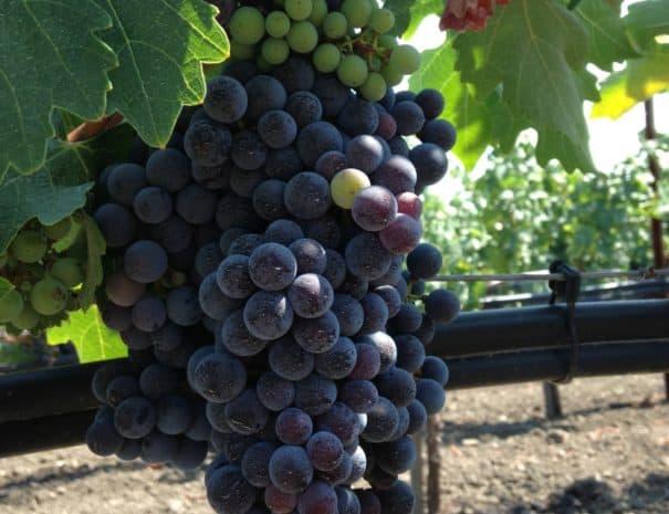 Wine 0915