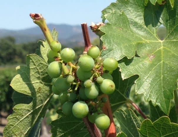 Wine 0916