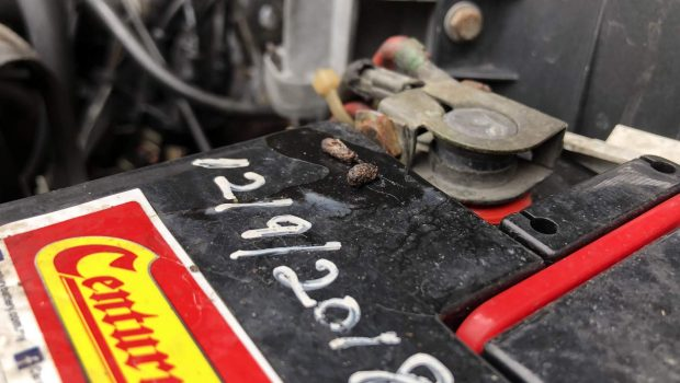 Rats in your car engine bay