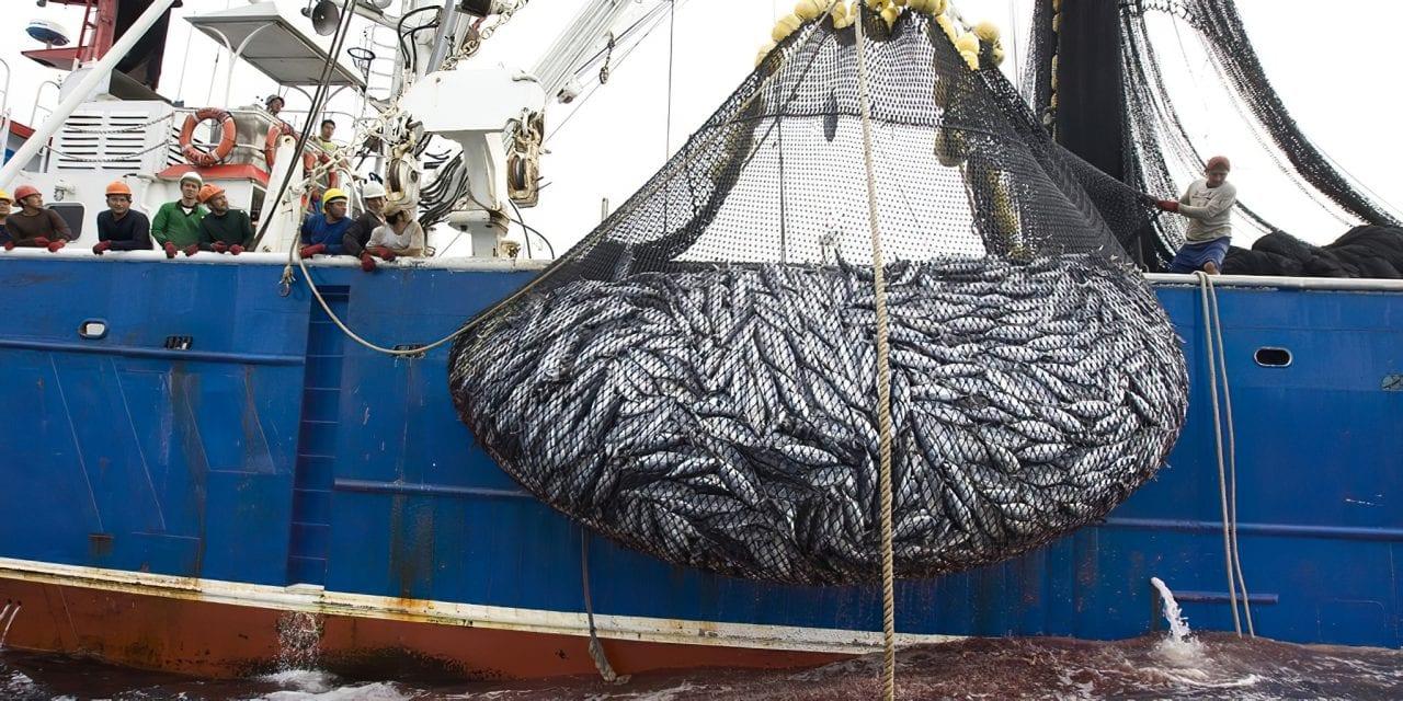 Barcos pesqueros chinos próximos a Galápagos entrarán en una moratoria afirma Ecuador