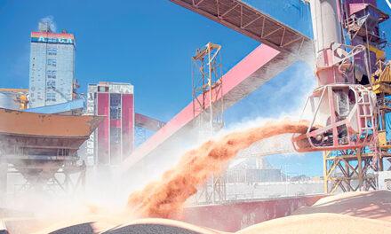 Soja: se despertó la liquidación de exportaciones de harina y aceite