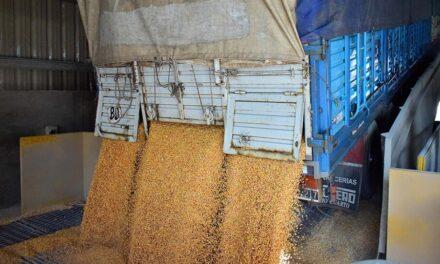 Reglamentaron el aumento de 22,5% para el transporte de cargas de cereales y oleaginosas