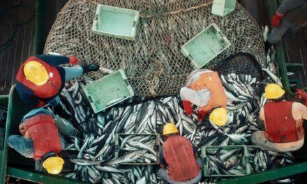Buscan fortalecer el sistema de capturas y exportaciones en el sector pesquero