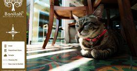 บ้านอ้ายหล้า บ้านรักแมว