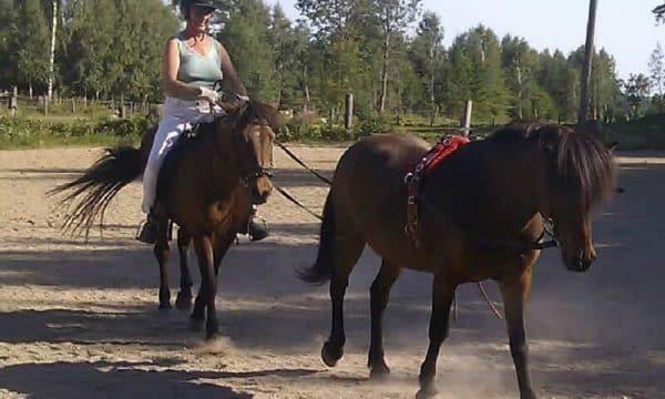 Eriksdals-hästar2