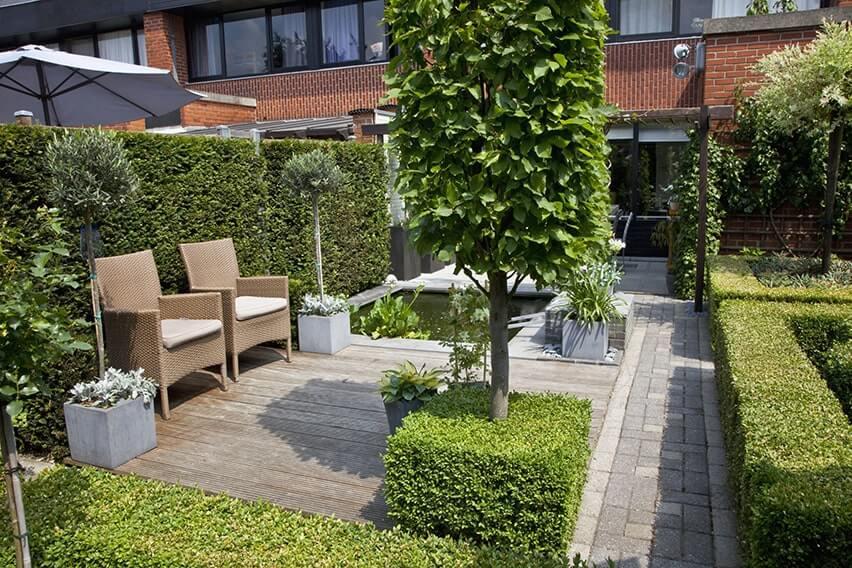 27796-Buxus-boxwood-Taxus-yew-hedge-urban-garden