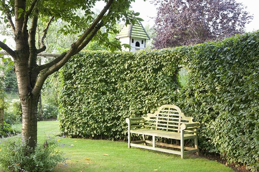 01462539-Fagus-park-estate-garden-spring