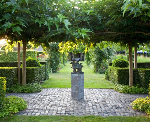 laurel shrubs for sale
