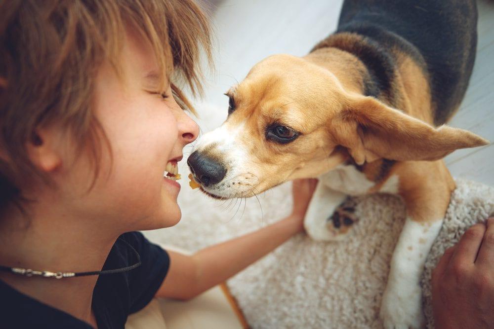 Pet Custody in Florida Divorce