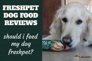 Freshpet Dog Food Reviews - Should I Feed My Dog Freshpet? Golden Retriever licking at Freshpet Dog Food Roll.
