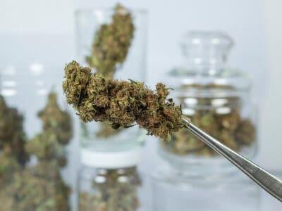 Cannabisblüten aus der Apotheke: keine Preissenkung