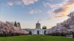 Oregon: Wohin mit dem Cannabis-Überschuss?
