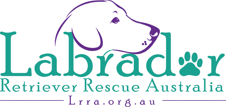 Labrador Retriever Rescue Australia
