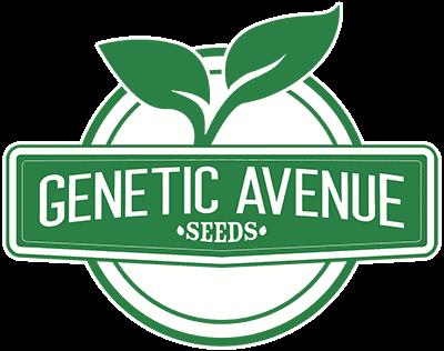 GENETIC_AVENUE_SEEDS_LOGO_LUSCIOUS_GENETICS