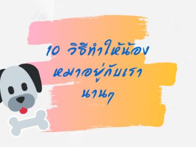 10 วิธีทำให้น้องหมาอยู่กับเรานาน ๆ