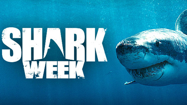 18 Best Shark Week Memes