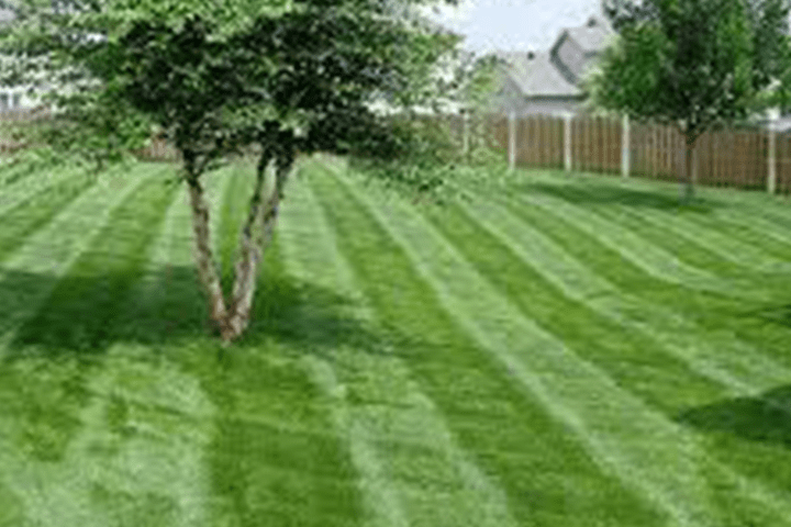 Landscape Maintenance & Irrigation