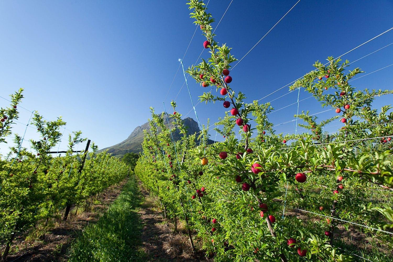Mount Joy Farms - Fruit4
