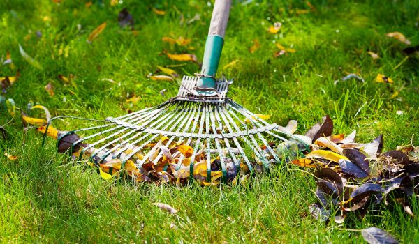 Spring Cleanup Rake Leaves