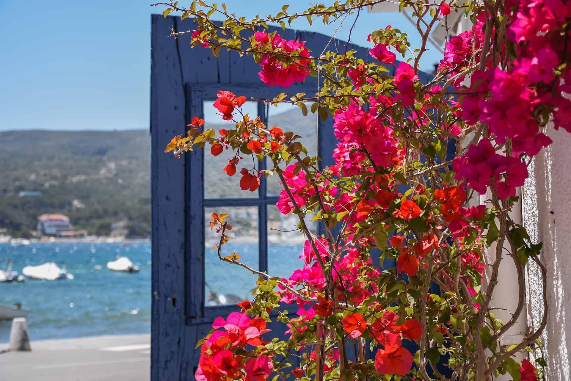 Sea Detail Colors Blue Flowers Cadaqués