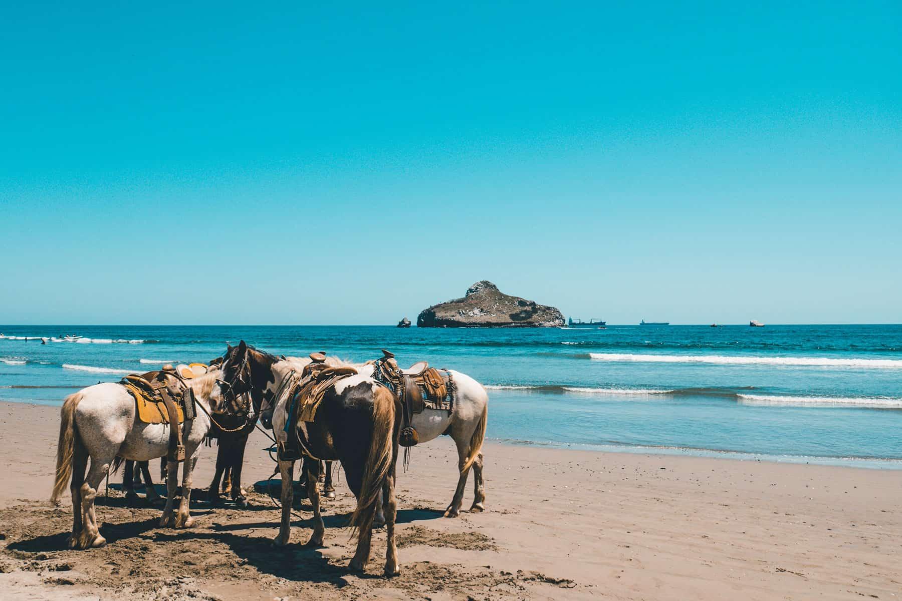 Resor_till_Madeira_i_Portugal_hästridning_med_Nygren_Lind_Resebyrå